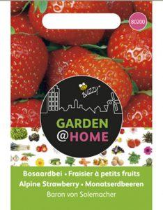 Aardbeien Planten Kopen Intratuin.Aardbeien Kweken Aardbeienplanten Kweken En Verzorgen